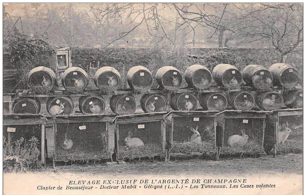 Konijnenfokkerij voor 1918